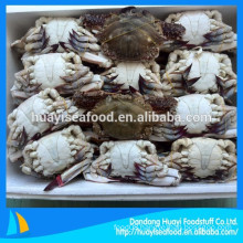 hot sale various size whole round blue swimming crab