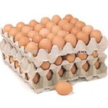 Molho de celulose de bandeja de ovos