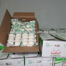 Knoblauch verpackt durch Mesh-Tasche & Karton