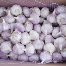 Fresh New Crop Alho Branco Normal para o Brasil Mercado
