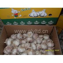 Boa Qualty Chinês Fresco Alho Branco Normal