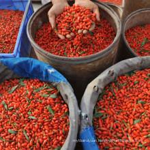 Non GMO Superfood Eu Standard Goji Berries