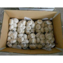 L'ail blanc pur à la chinoise