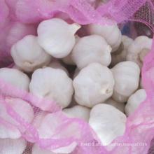 Fornecendo fresco alho branco puro