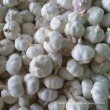 Qualidade padrão exportada de alho branco fresco