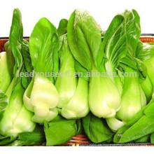 NPK08 Sihai baicai semillas para la venta, semillas de col