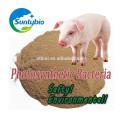 BACTÉRIAS FOTOSSINTÉTICAS (PSB) / aditivos alimentares / PROFISSIONAIS DE ALIMENTAÇÃO