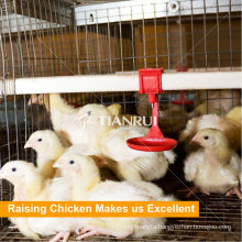 Popular Low Price Automatic Pullet Cages