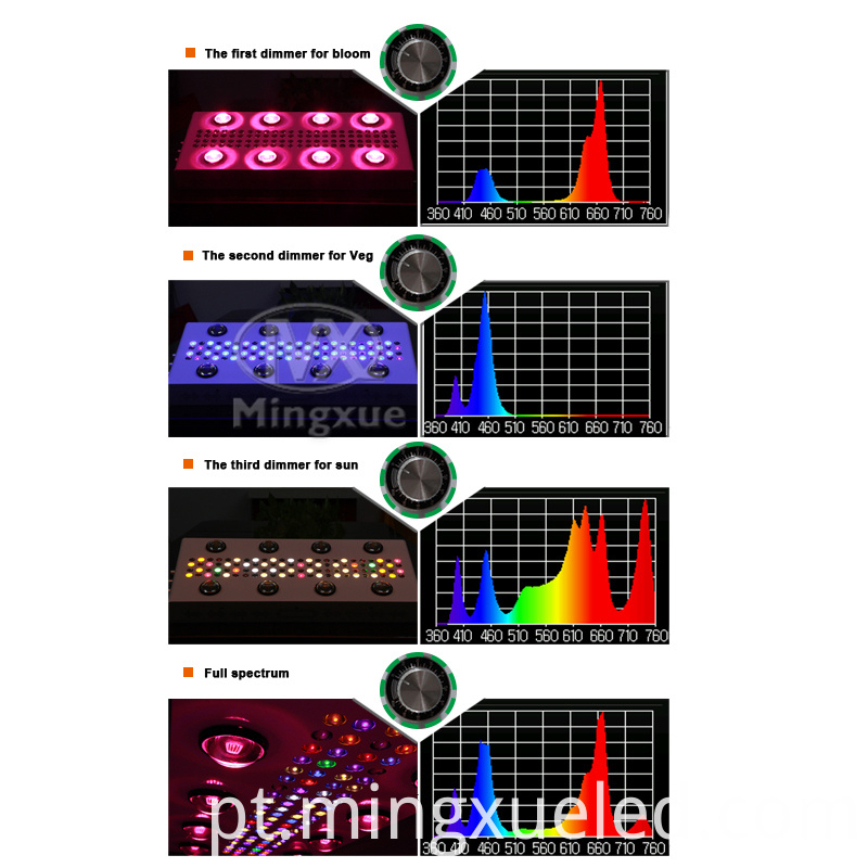 Spectrum picture of 4 phases