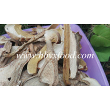 Dried Porcini Mushroom Competitive Price