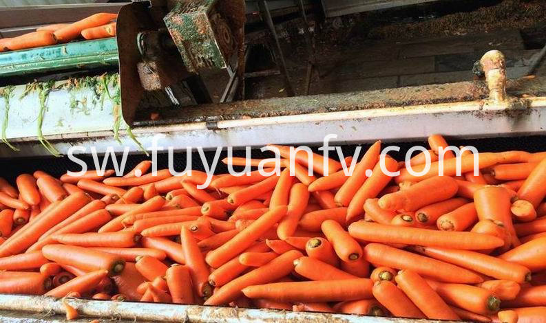 carrot in carton