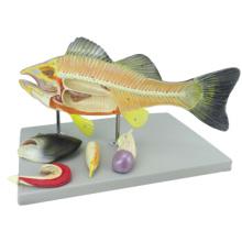Купить один 12011 животных рыб, 5-части пластиковых окунь анатомические модели
