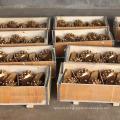 Único artigo único rolo de vedação tci broca tricone cortador de bits / broca para perfuração de poços