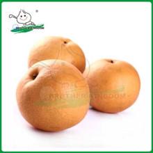 Exportación nueva pera fresca del fengshui / pera deliciosa de China Del Nashi