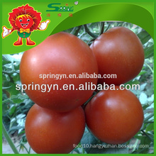 100% natural planting Crystal red tomato a tomato from China