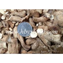 Jambe de champignons séchés à chaud avec certificat Halal