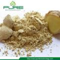 Water Soluble Ginger Powder Bulk Sale