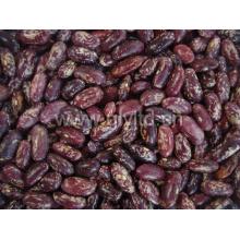 Chinesische purpurrote gesprenkelte Gartenbohne in der guten Qualität