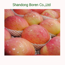 Export Fresh Red Star Apple aus China
