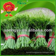 2015 fresh Chayote shoot 100% organic green vegetables
