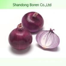 Fresh Vegetable Onion From Sdboren