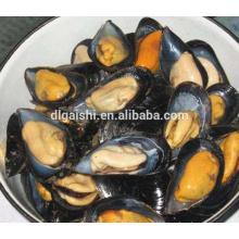 Frozen dried mussel