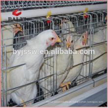 Jaula De Frango De Camarão De Aves Para Fazendas De Frango De Costa Rica