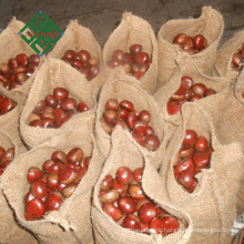 sweet chestnuts from China