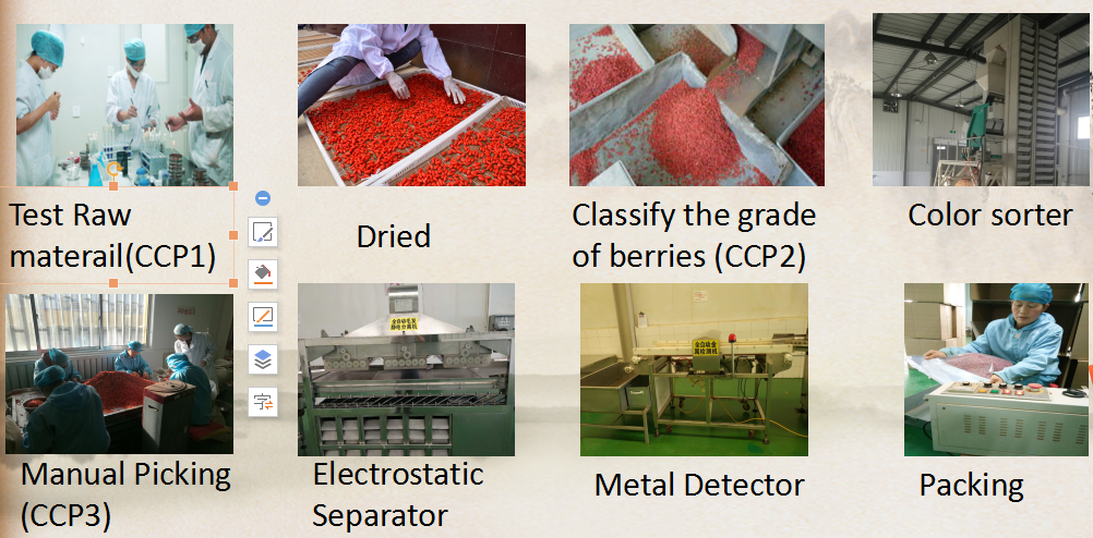 Organic Goji Berries Processing