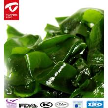 Algas frescas de Dalian