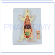 ПНТ-0821 горячая распродажа животное крыса мышь модель