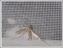 Anti Insect Screen
