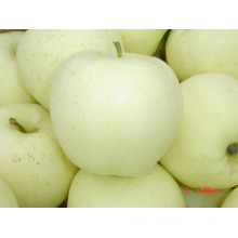 New Crop High Quality for Exporting Golden Apple