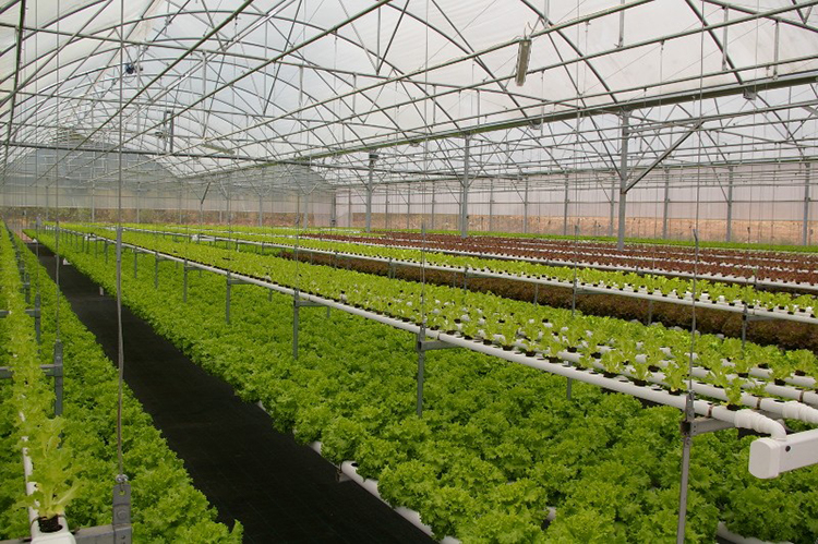 PC board greenhouse