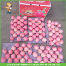 Top Quality Best Supplier Chinese Fresh Apple Plastic Bagged Red Fuji Apple