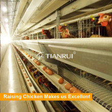 poultry farming equipment automatic chicken layer cage for sale