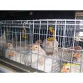Cages de poulet à griller résistant au vieillissement et à la corrosion, populaires dans le monde