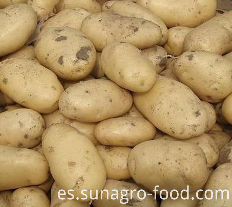 Fresh Potatoes For Export