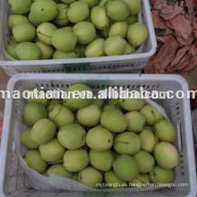 Shandong Pears