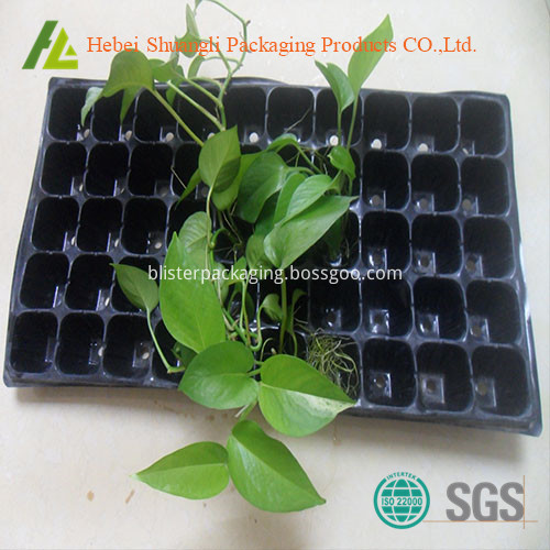 Nursery Seeding Tray