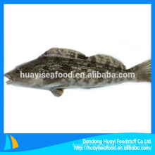 frozen fish fat greenling seafood