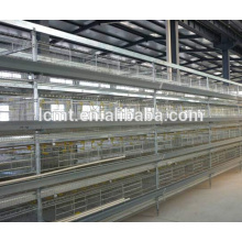 Automatic Poultry Farming Equipment for Chicken Farming Feeding System