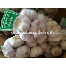 Nuevo Cultivo China White Garlic