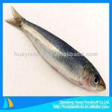Fresh frozen seafood sardine all types of sardine fishes