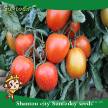Suntoday wholesale rio roma grande determiniert pflanzen red indian prozess sgyanta 1359 tomatensamen offen abgelegt (22015)