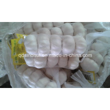 New Harvest Pure White Garlic (size 5.5cm&up)