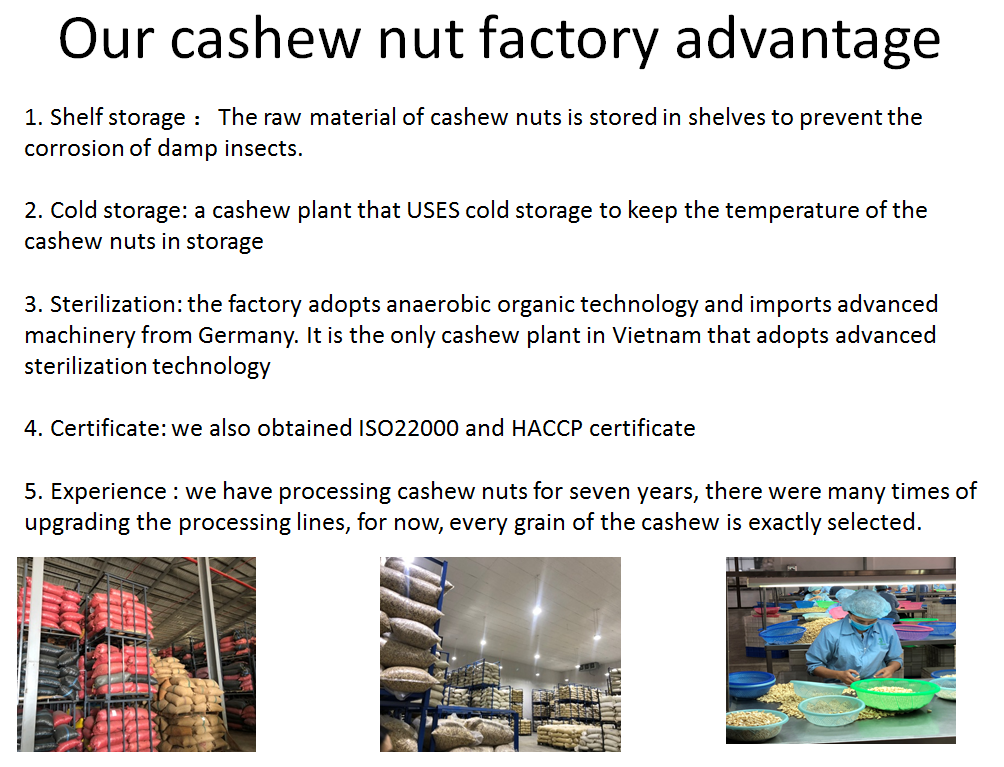 cashew nut factory advantage