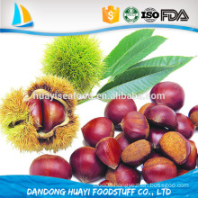 good price fresh chestnut for sale in Dandong wholesale price bulk chestnuts