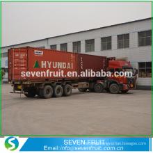 Seven Fruit supply walnut kernel raw amber for sale in bulk sale