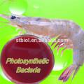 Fornecedor de bactérias fotossintéticas aditivo para ração